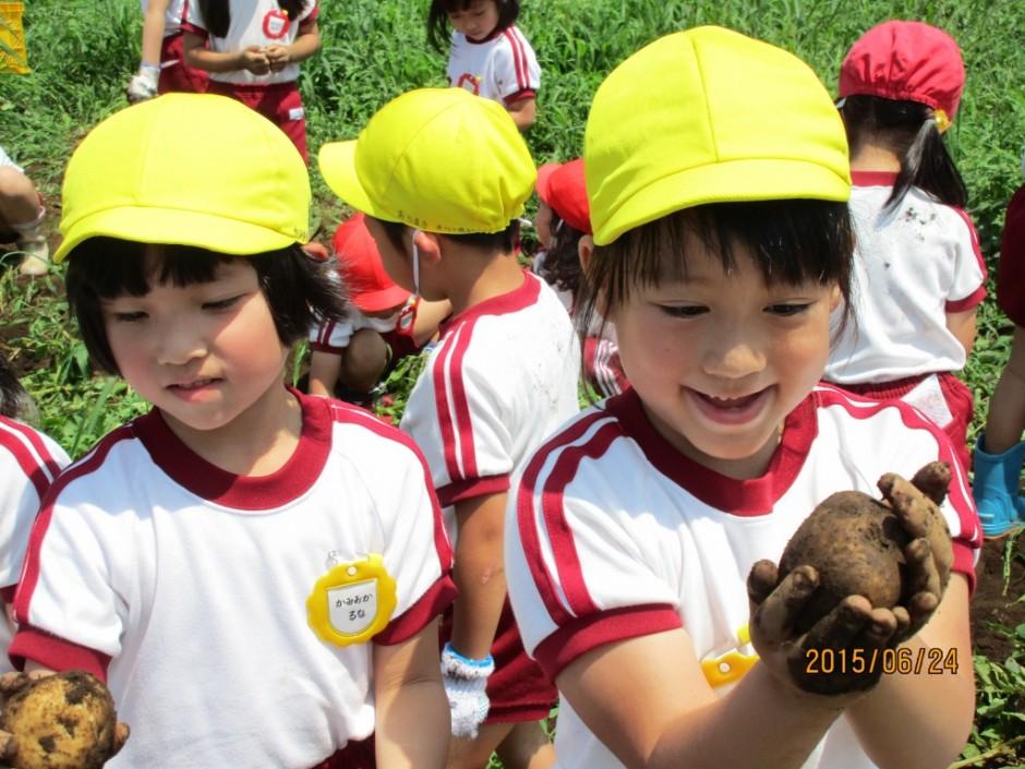6月24日ジャガイモ掘り こんな大きなジャガイモが採れました。