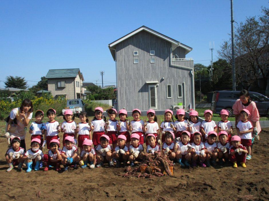 28年サツマ芋掘り10月20日 でも1コンテナ掘ることができました。
