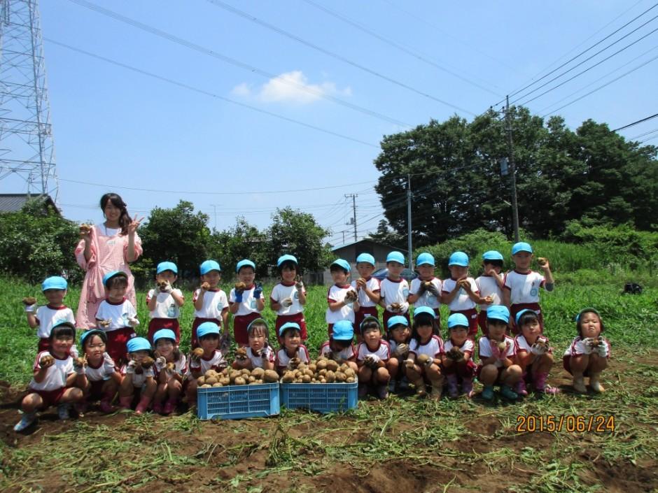 6月24日ジャガイモ掘り 今年のジャガイモは豊作です。ジャガイモは給食でみんなと一緒においしく食べます。