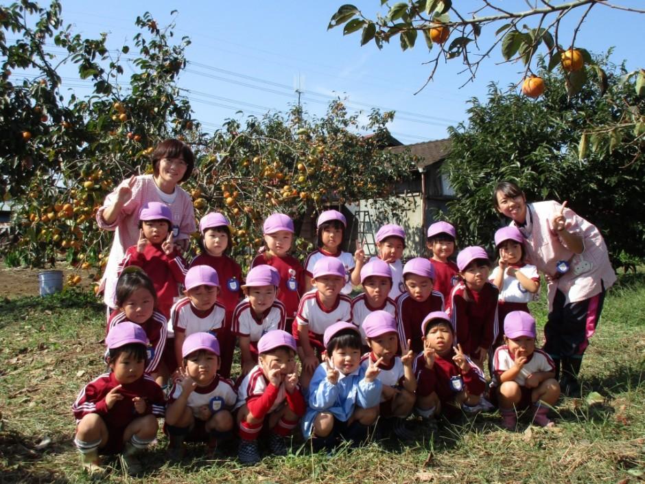 柿狩り。10月9日柿狩り日より すみれ組