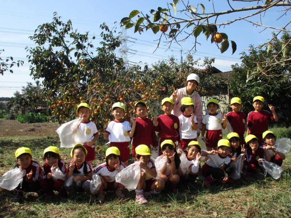 柿狩り。10月9日柿狩り日より きく組