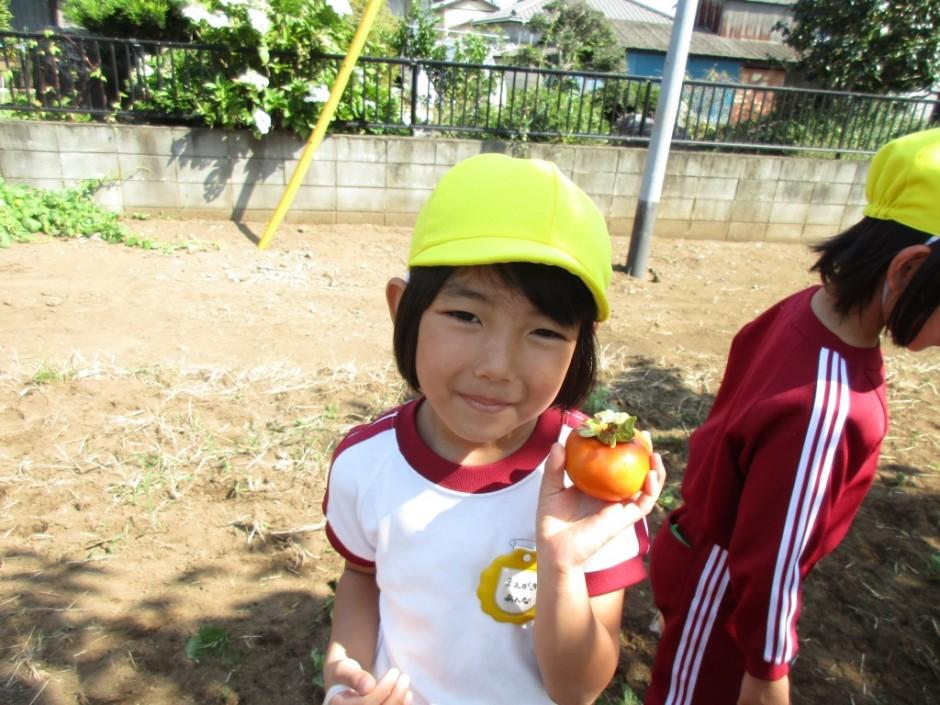柿狩り。10月9日柿狩り日より きれいな柿でしょ。