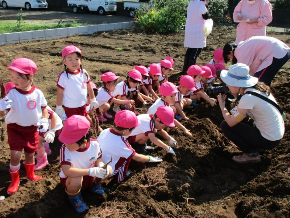28年サツマ芋掘り10月20日 もも組さんたくさんおいも掘れるかな。