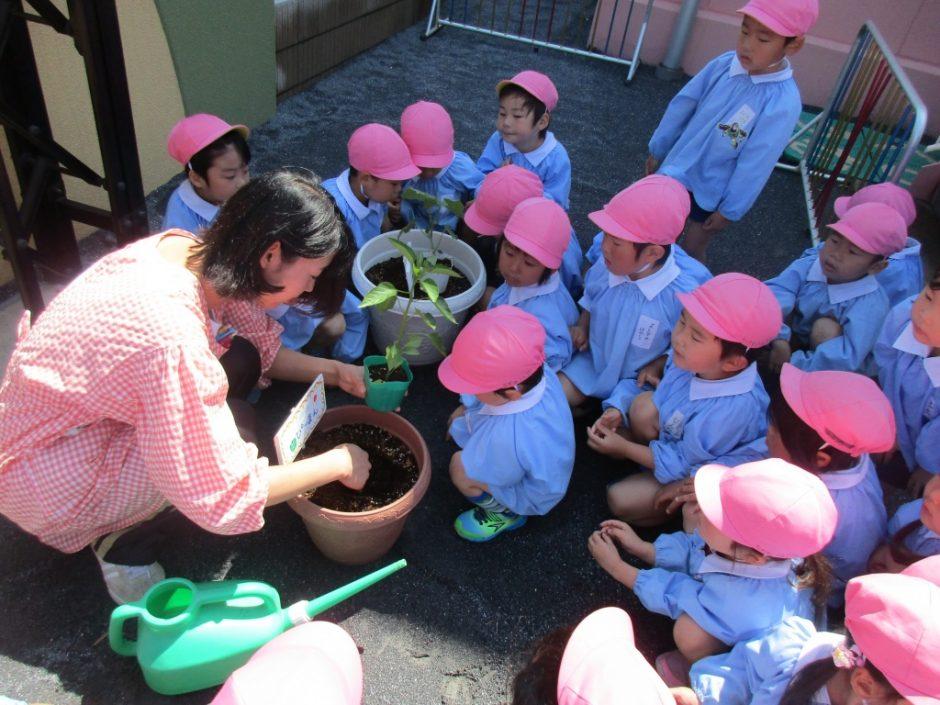 野菜の苗を植えました 大切に育ててくださいね~(^^)