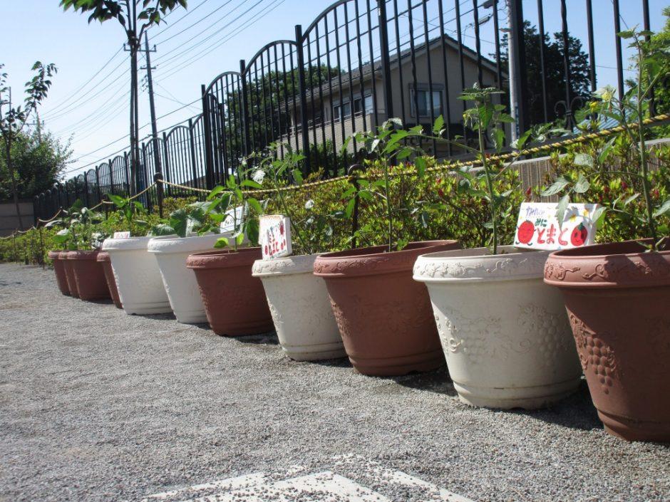 野菜の苗を植えました たくさん収穫できるのを楽しみに待ちましょう♪