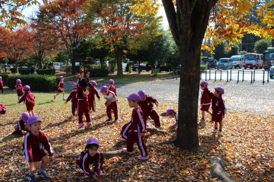 園外保育(年中・年少) 落ち葉のじゅうたん☆きれいですね!
