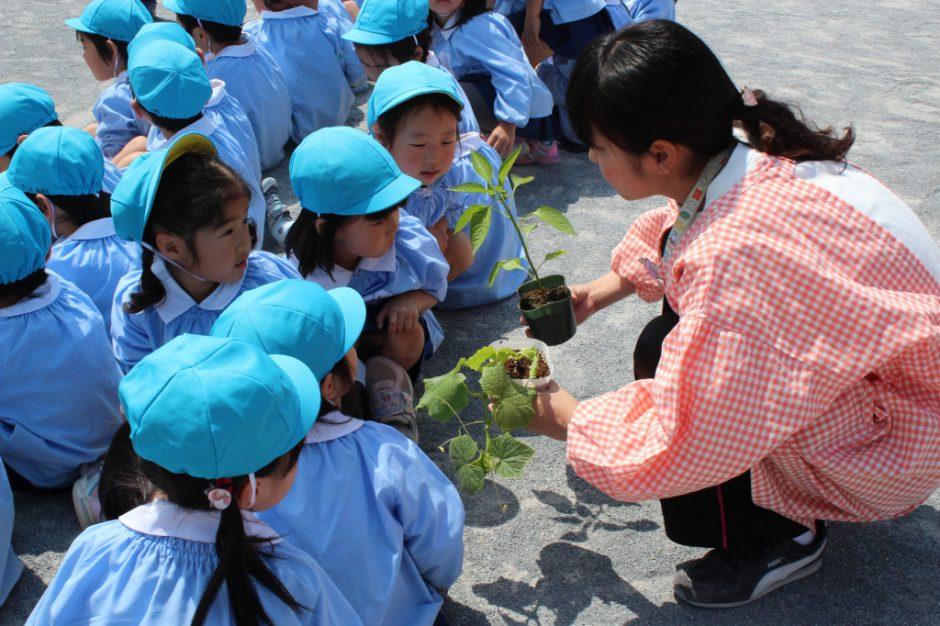 野菜の苗を植えました 年中さんはピーマンときゅうりを植えました