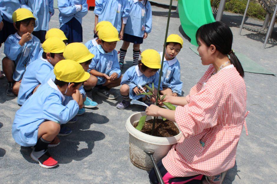 野菜の苗を植えました 年長さんは枝豆となすを植えました