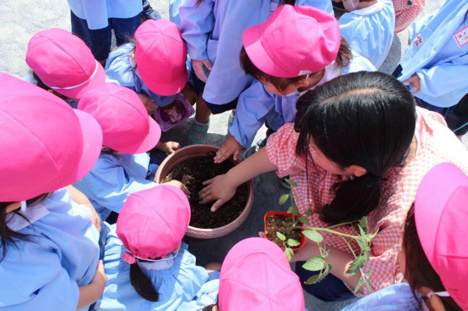 野菜の苗を植えました たくさん実がなるといいですね♪