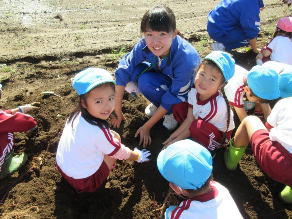 さつまいも掘り 西中学校のお姉さん先生も一緒に掘ってくれました♪