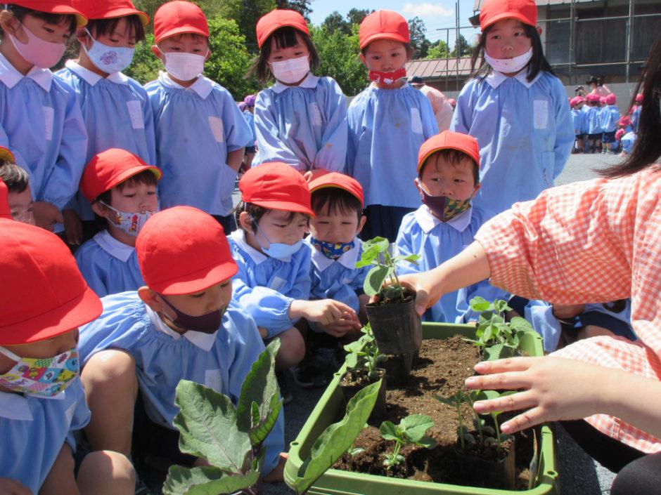 野菜の苗を植えました 先生の話を真剣に聞いて取り組んでいます! どんなふうに大きくなるのかこれから観察も楽しみですね☆彡