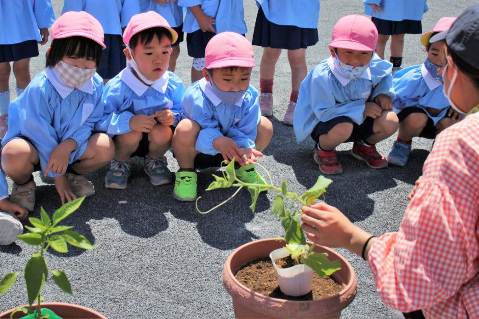 野菜の苗を植えました 早く植えたくてそわそわ、どきどきな年中さん(^_-)-☆ きちんと説明を聞いています☆彡