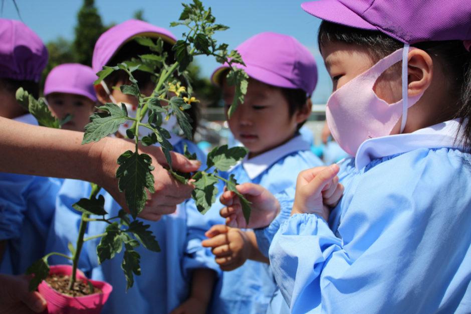 野菜の苗を植えました 年少さんは「ミニトマト」を植えます(≧▽≦) においを嗅いだり、触ったり普段見慣れない苗に興味津々の年少さん(^^♪