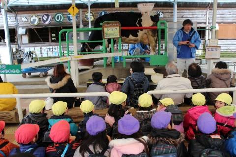 おわかれ遠足(年長) 乳牛コーナーで牛の乳搾りを体験しました!