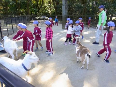 園外保育 きく 今年は動物園にも足をのばしました・・・。