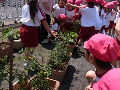 野菜の栽培 きゅうり、ミニトマト、なす・・・